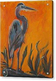 Great Blue Acrylic Print by Stephanie Allison