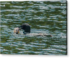 Acrylic Print featuring the photograph Great Catch by Brenda Jacobs