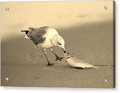 Acrylic Print featuring the photograph Great Catch With Fish by Cynthia Guinn