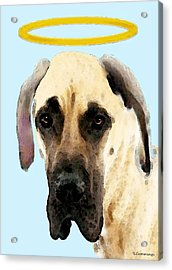 Great Dane Art - I Didn't Do It Acrylic Print by Sharon Cummings