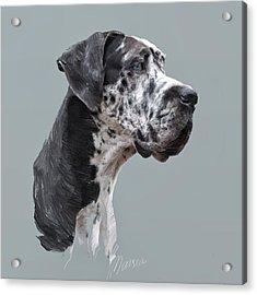 Great Dane Acrylic Print by Marina Likholat