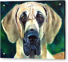 Great Dane Nobility Acrylic Print by Lyn Cook