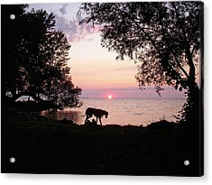 Great Dane Sunset Acrylic Print by Aimee L Maher Photography and Art Visit ALMGallerydotcom