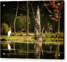 Great Egret And Great Blue Heron Acrylic Print by Scott Hovind