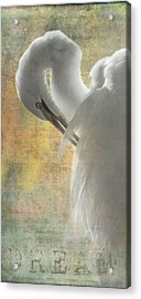 Great Egret Dream Acrylic Print by Angie Vogel