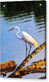Great Egret Fishing Oil Painting Acrylic Print