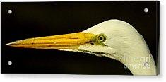 Great Egret Head Acrylic Print by Robert Frederick