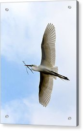 Great Egret In Flight Acrylic Print by Richard Bryce and Family