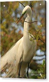 Great Egret Impressions Acrylic Print