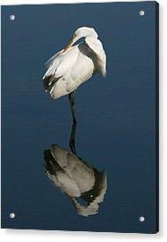 Great Egret Reflection 11x14 Acrylic Print by David Lynch