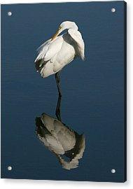 Great Egret Reflection 8x10 Acrylic Print by David Lynch