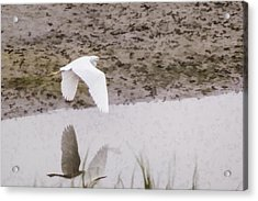 Great Egret Acrylic Print by Photographic Art by Russel Ray Photos