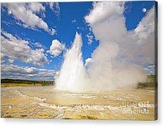 Great Fountain Geyser In Yellowstone  Acrylic Print