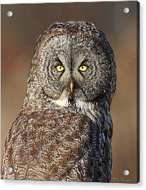 Great Gray Owl Portrait Acrylic Print by Daniel Behm