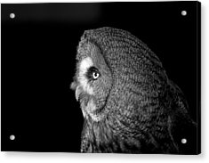Great Grey Owl 6 Acrylic Print by Simon Gregory