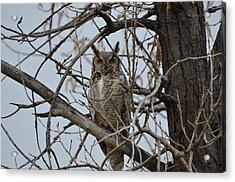 Great Horn Perched Acrylic Print