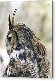 Great Horned Owl Acrylic Print by Dana Moyer
