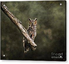 Great Horned Owl I Acrylic Print by Jai Johnson