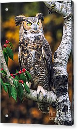 Great Horned Owl IIi Acrylic Print by Todd Bielby