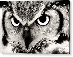 Great Horned Owl In Black And White Acrylic Print