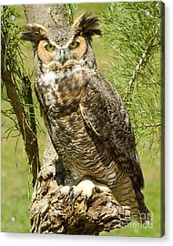 Acrylic Print featuring the photograph Great Horned Owl by JRP Photography