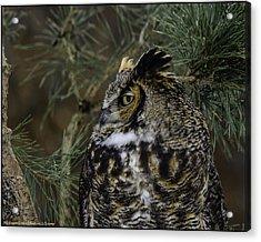 Great Horned Owl Acrylic Print by LeeAnn McLaneGoetz McLaneGoetzStudioLLCcom