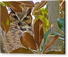 Acrylic Print featuring the photograph Great Horned Owl by Meghan at FireBonnet Art