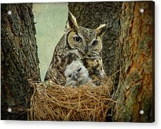 Great Horned Owl Mom And Baby Acrylic Print by Cgander Photography