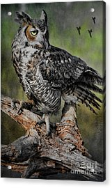 Great Horned Owl On Branch Acrylic Print