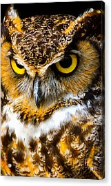 Great Horned Owl  Acrylic Print by Parker Cunningham