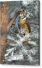 Great Horned Owl Acrylic Print by Peter J Sucy