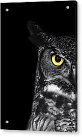 Great Horned Owl Photo Acrylic Print by Stephanie McDowell