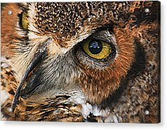 Great Horned Owl Acrylic Print by Tammy Schneider