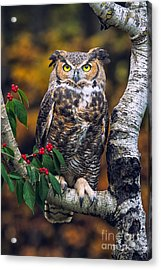 Great Horned Owl Acrylic Print by Todd Bielby