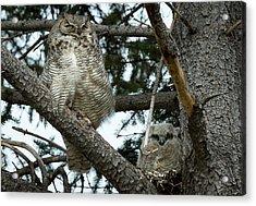 Great Horned Owls Acrylic Print