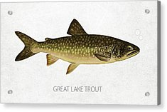 Great Lake Trout Acrylic Print by Aged Pixel