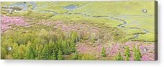 Great Meadow Flowers Blooming In Acadia National Park Acrylic Print by Keith Webber Jr
