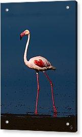Great Morning Beauty Acrylic Print by Jeppsson Photography