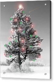 Great White Christmas Pine Acrylic Print