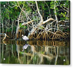 Great White Egret And Reflection In Swamp Mangroves Acrylic Print
