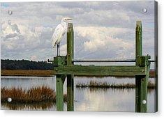 Great White Egret On The Marsh Acrylic Print by Paulette Thomas
