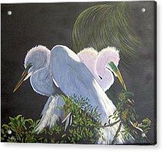 Great White Egrets Acrylic Print by Catherine Swerediuk