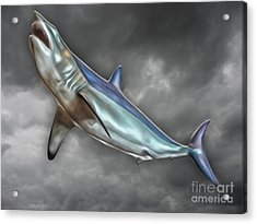 Great White Acrylic Print by Gregory Dyer