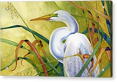 Great White Heron Acrylic Print by Lyse Anthony