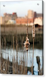 Greater Wilmington  Acrylic Print by JC Findley