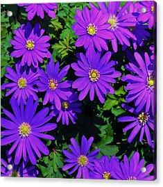 Grecian Wildflowers 2 Acrylic Print by John Wartman