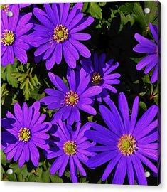 Grecian Wildflowers Acrylic Print