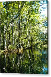 Gree Trees And Water  Acrylic Print