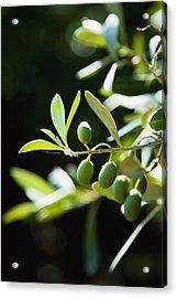 Greece, Halkidiki, Green Olives Acrylic Print by Naki Kouyioumtzis