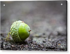 Acrylic Print featuring the photograph Green Acorn. by Gary Gillette